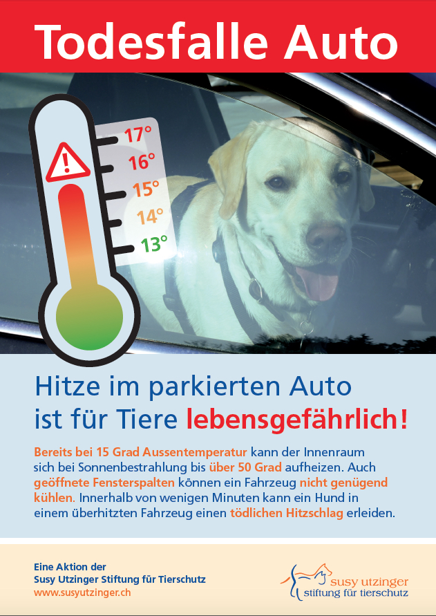 """Sommer - Todesfalle Auto"