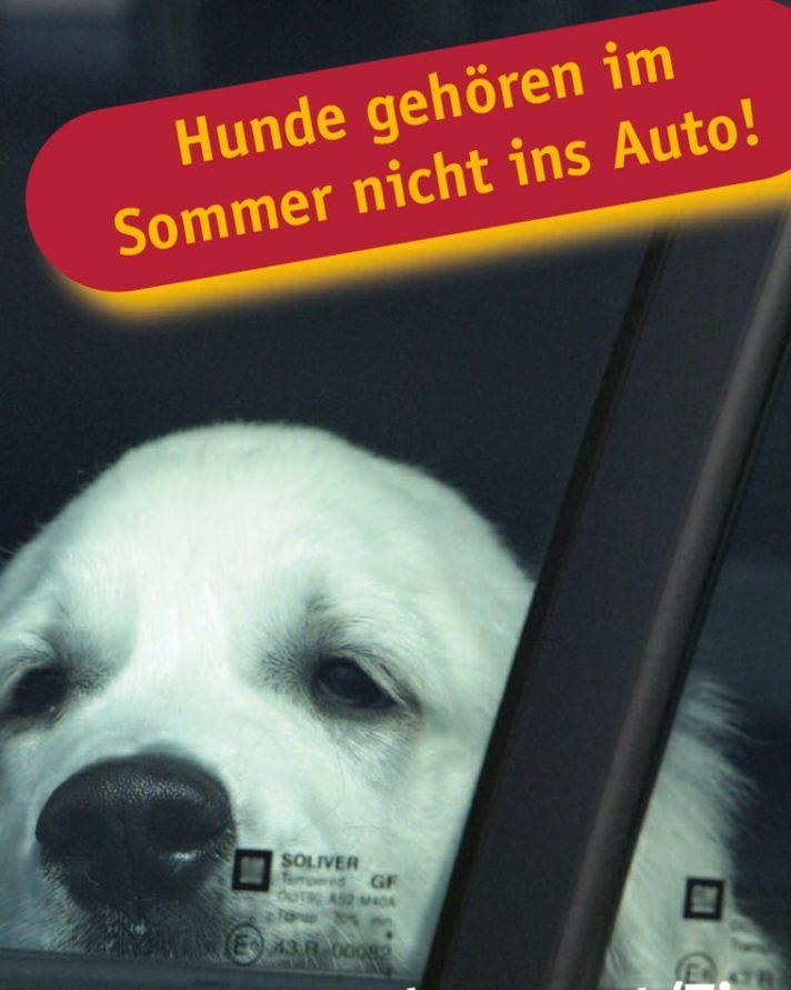 """""""Sommer - Hund im Backofen"""